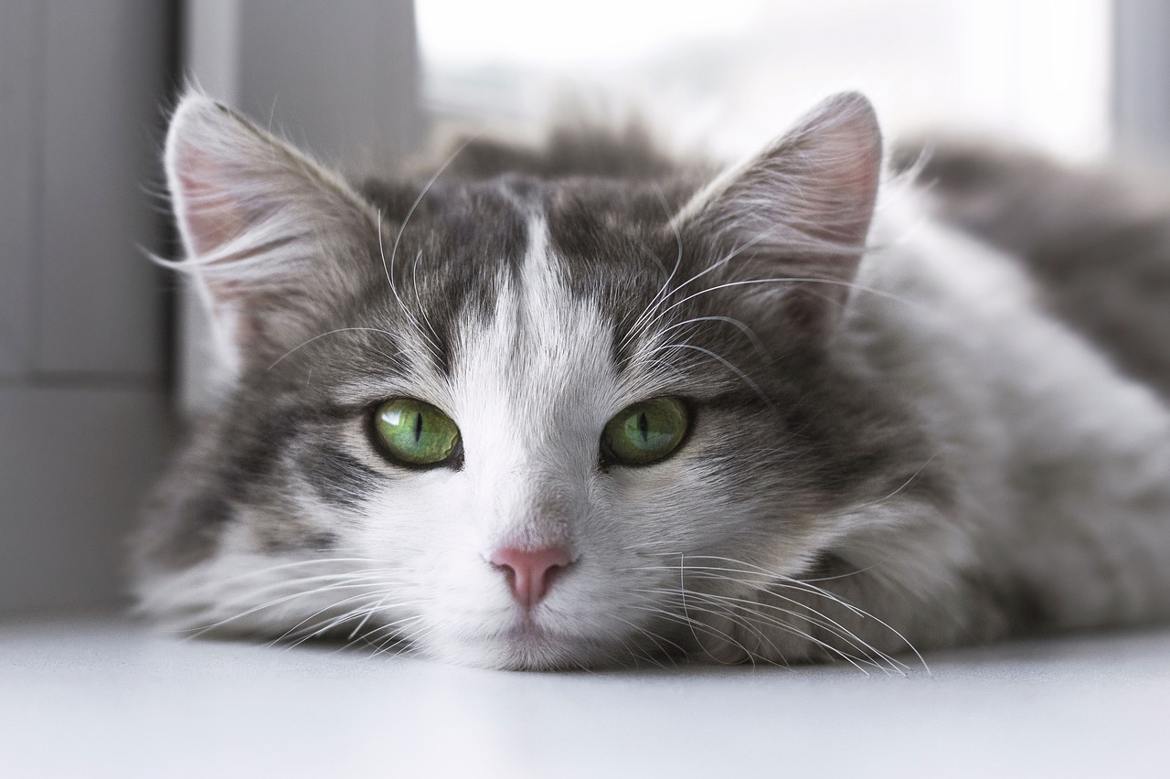 10 Reasons Why Every Home Needs A Cat