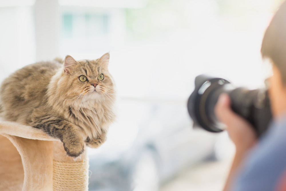 Tips to improve cat photography skills