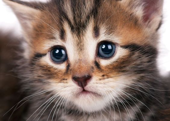 Signs Your Cat Is Depressed And How To Help The Kitty Blues