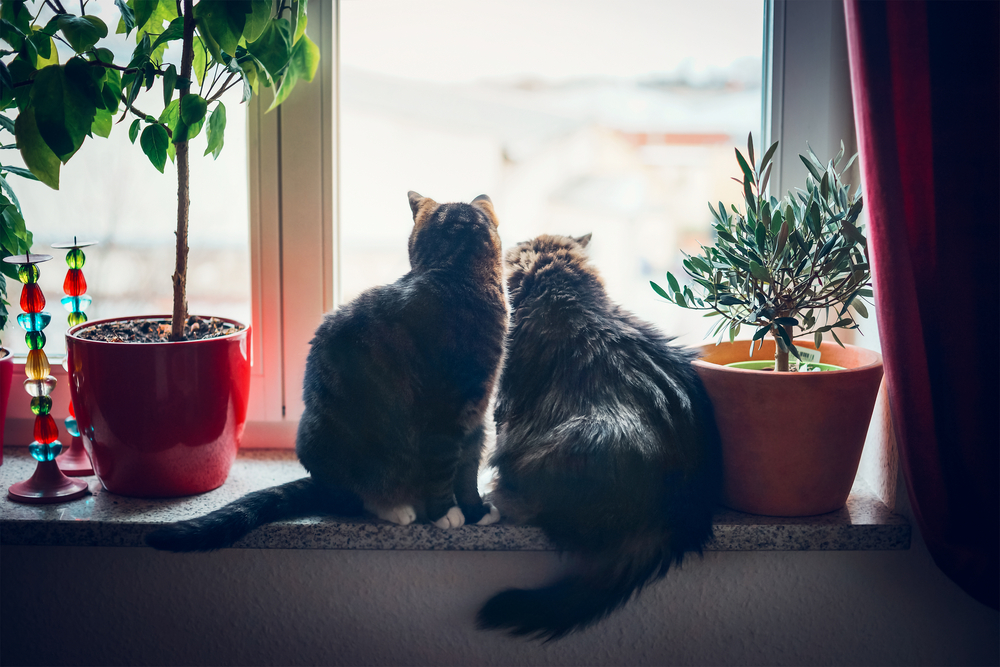 Cats Living Together