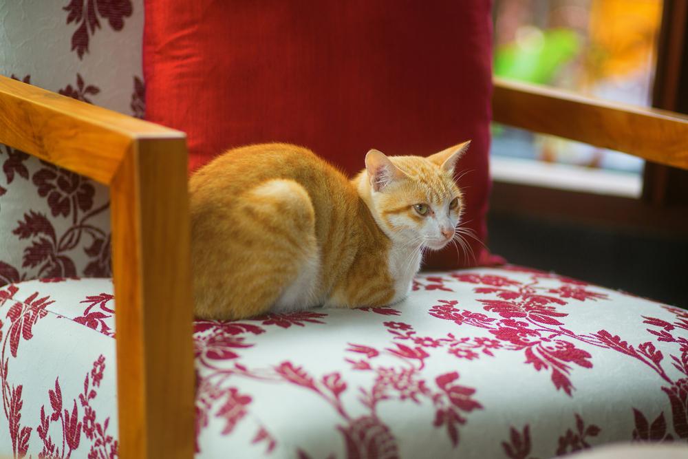 Feline friendly advice for the festive season
