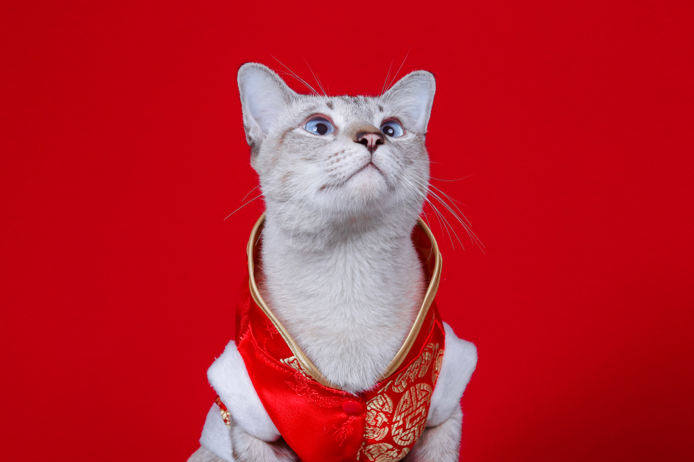 Food To Avoid Giving Your Cats This Chinese New Year
