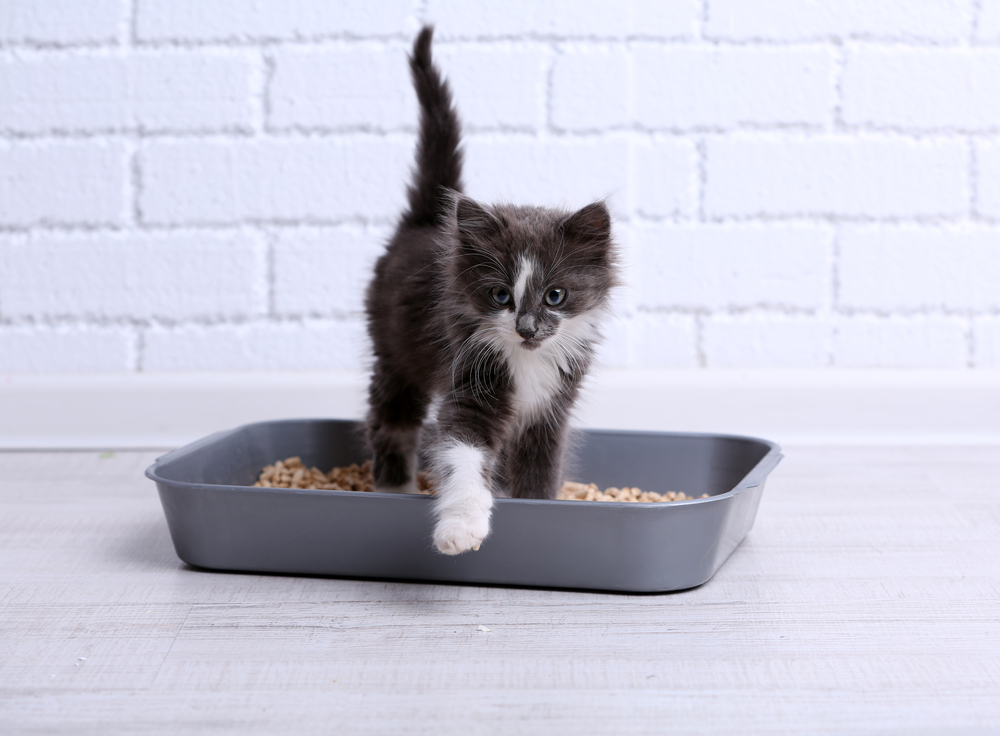 Why cats pee outside the litter box and how to stop it