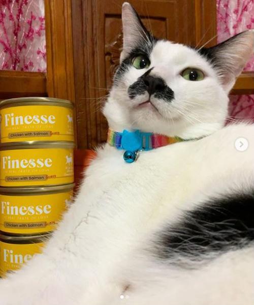 CatSmart Instagram Photo