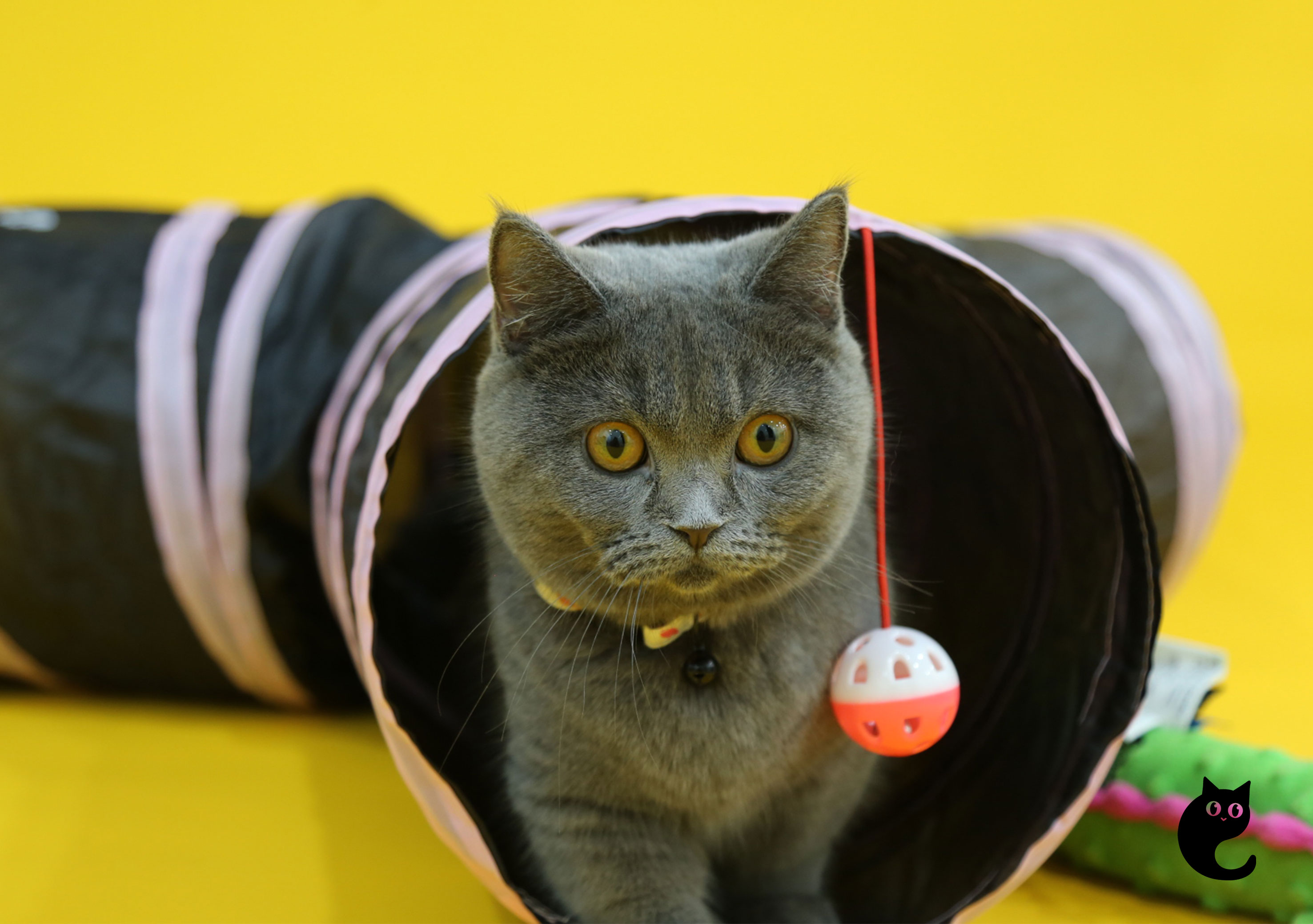 Tunnel Your Way Into Kitty Playground