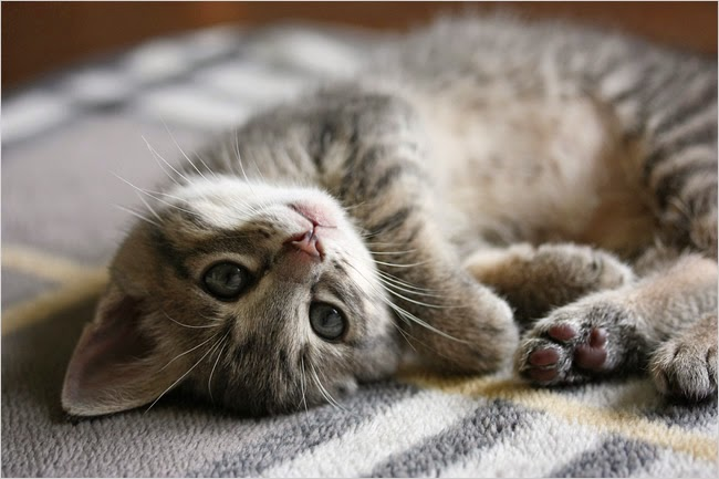 10 Signs Your Kitty Actually Loves You