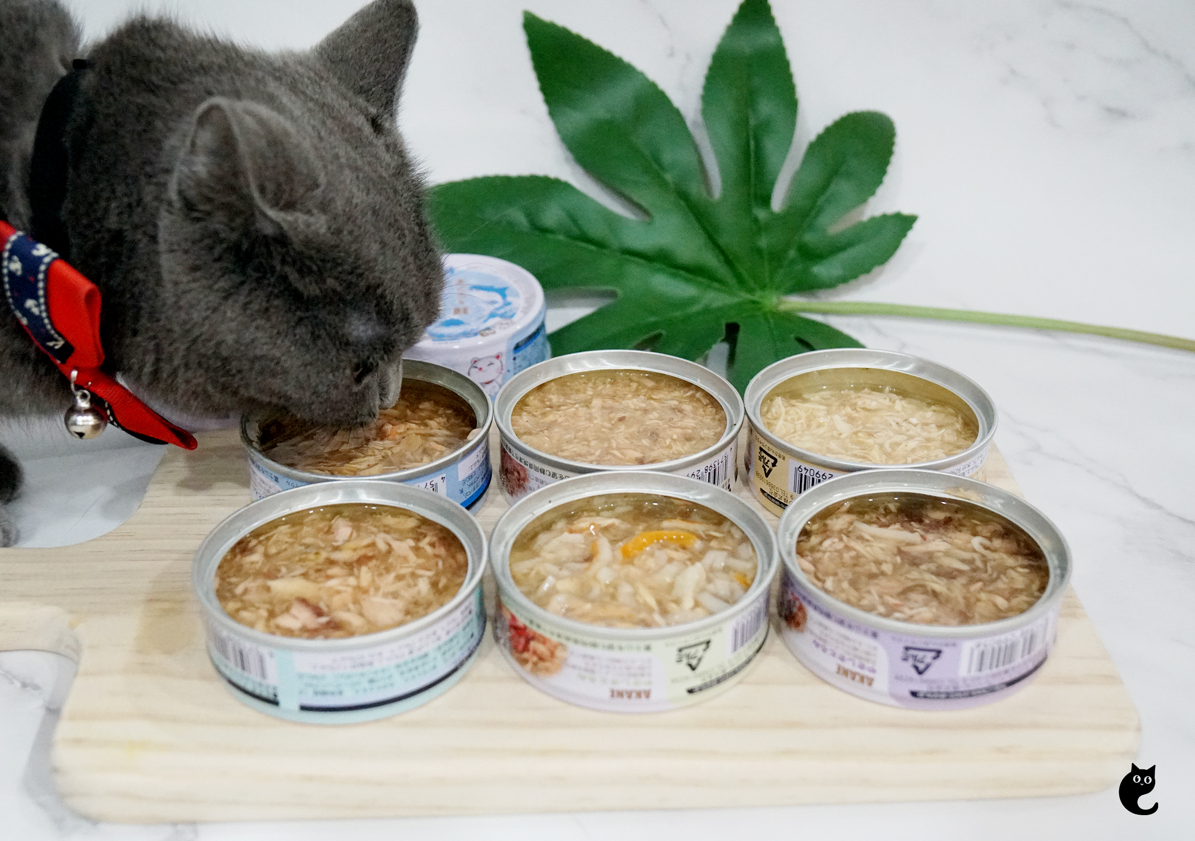 3 Meow-Tastic Benefits of Feeding A Complementary Wet Food