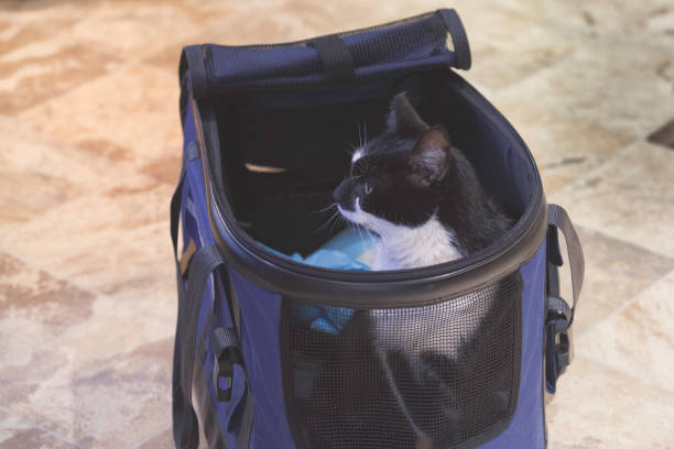 How To Pick The Best Carrier For Your Beloved Senior Feline