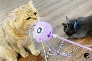 The Dooee solution to keep your cats healthy and occupied.