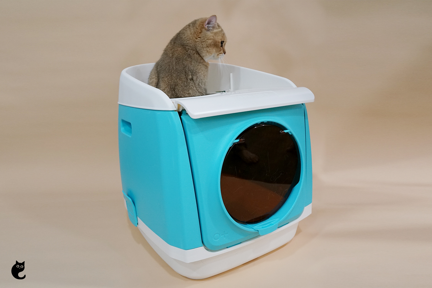 How Can I Transit My Cat To A Hooded Litter Box?