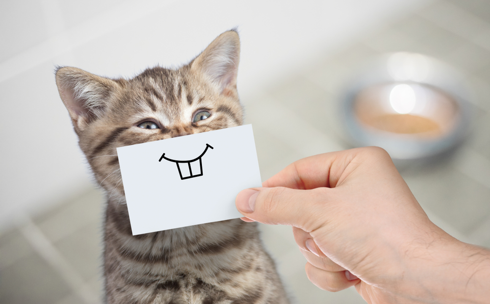 How Can You Tell If Your Cat Is Happy?