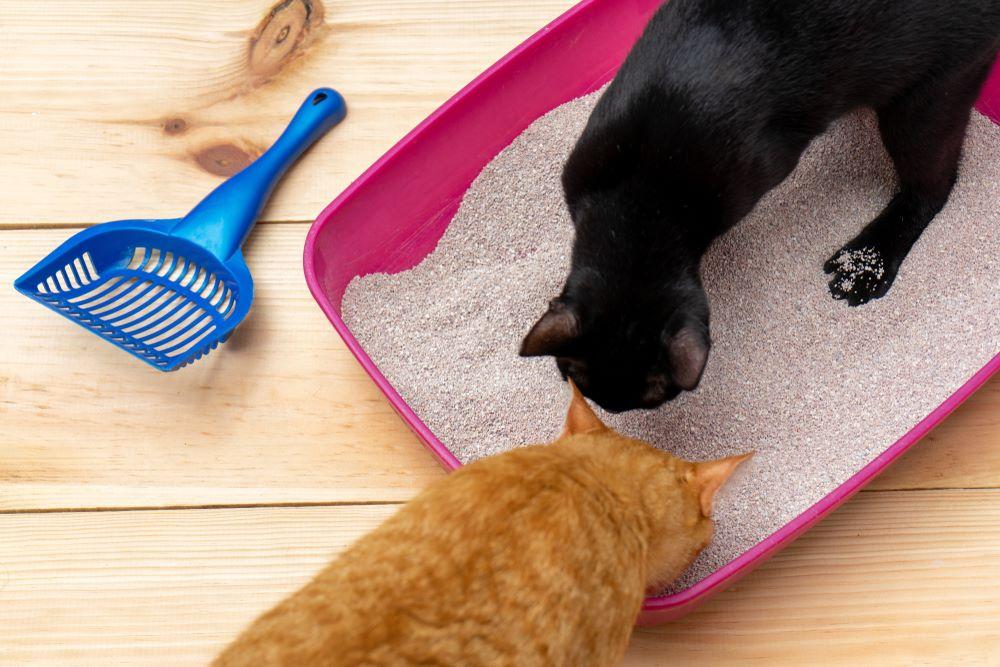 Do Cats Prefer Open Litter Boxes?