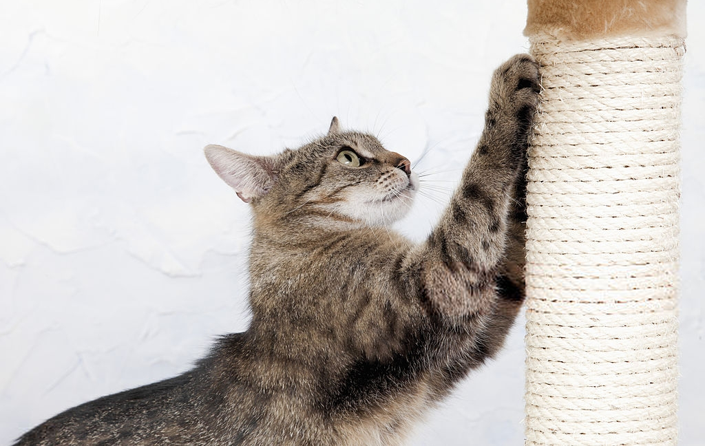 What Makes A Good Scratching Furniture?