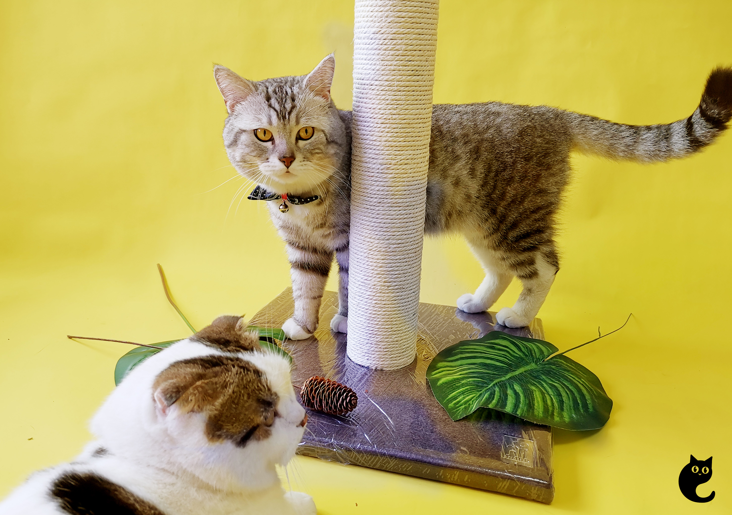 Petrebels, Trendy Cat Furniture That Will Rock Any Home