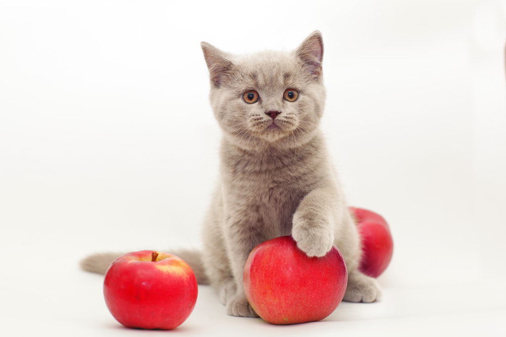 6 Amazing Fruity Ways To Improve Your Cat's Diet
