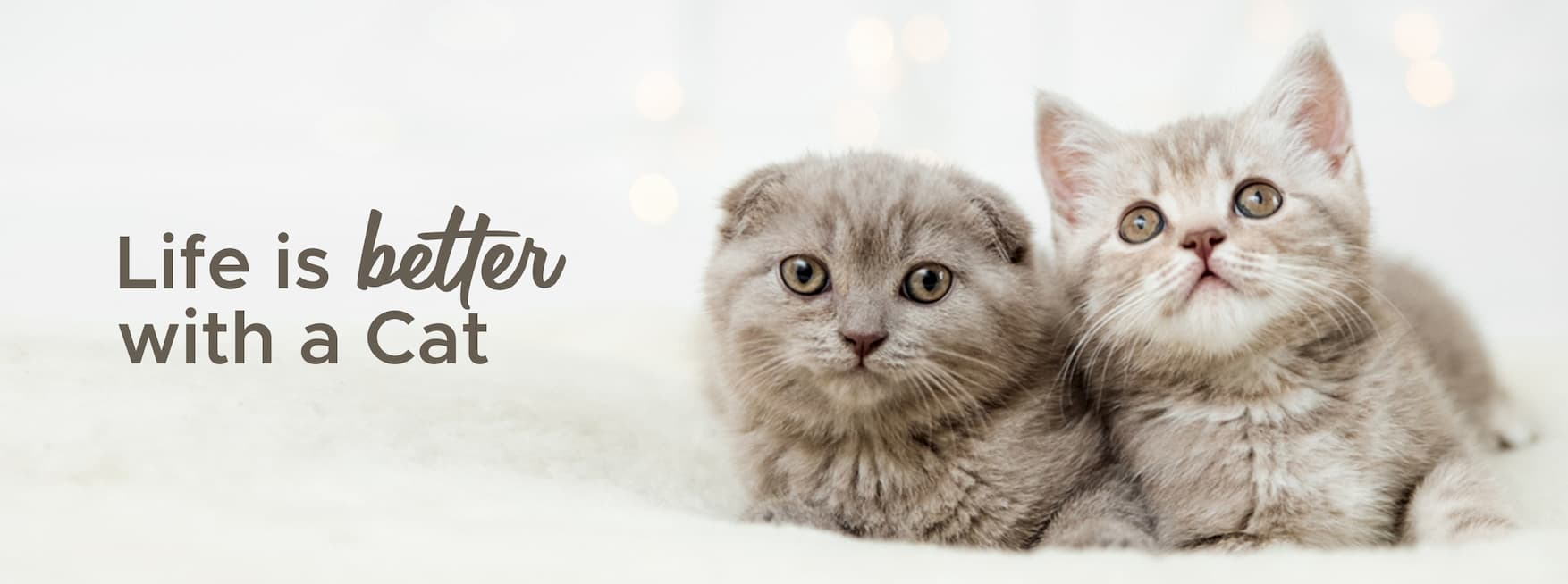 Kittens for sale singapore