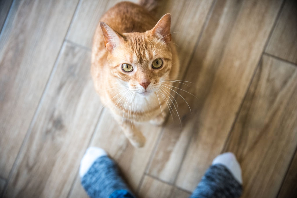 Do Cats Really Know Their Names?