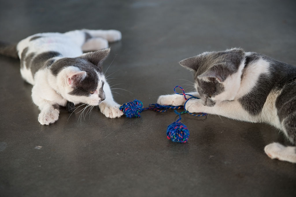 Achieving Satisfying Playtime in Multi-Cat Households