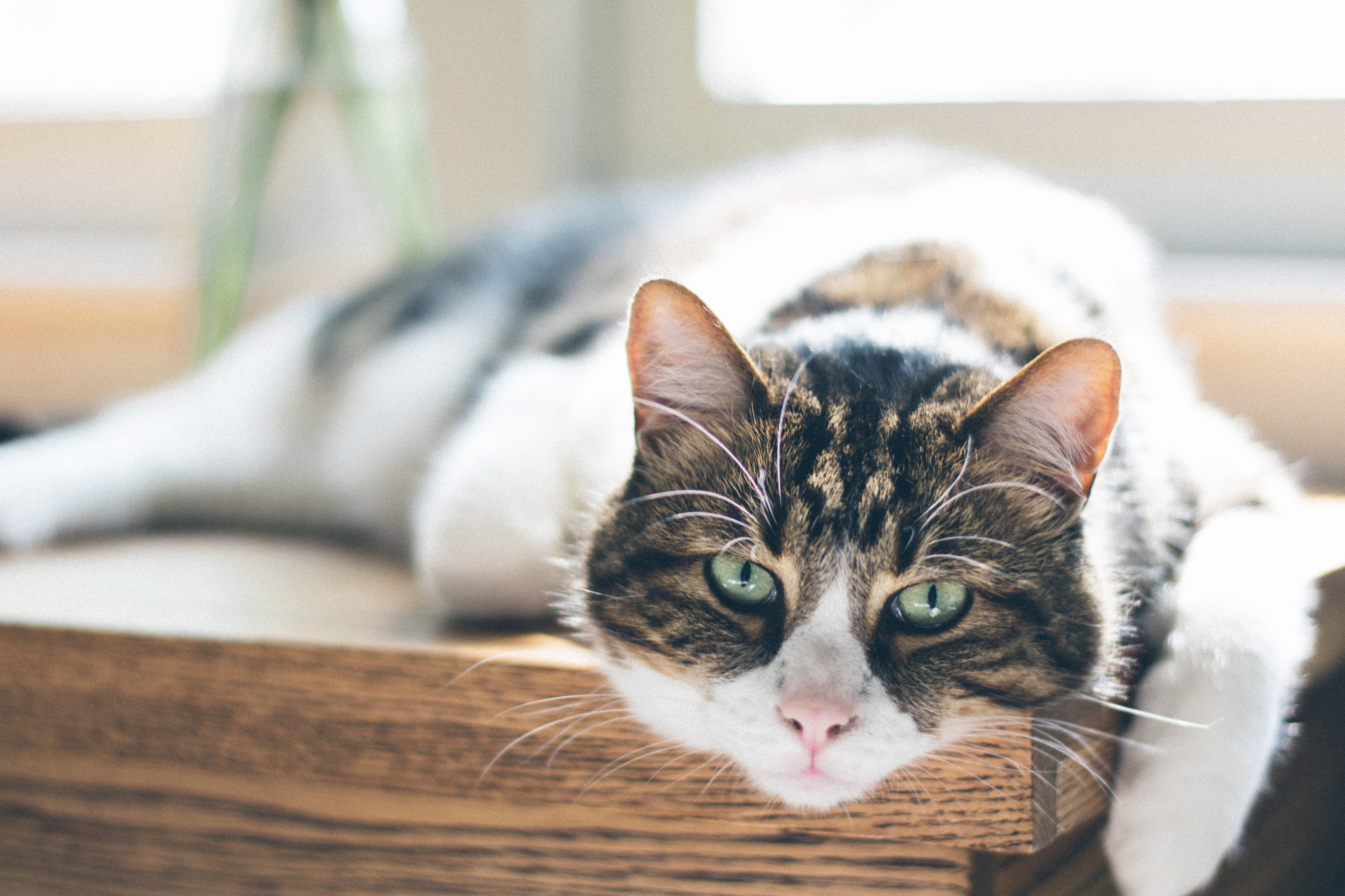 How to keep the house safe for your senior cat?