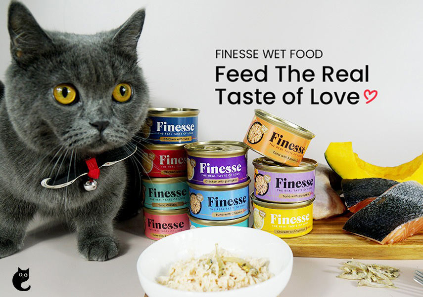 Why You Should Start Feeding Your Feline Finesse Grain-free Wet Cat Food