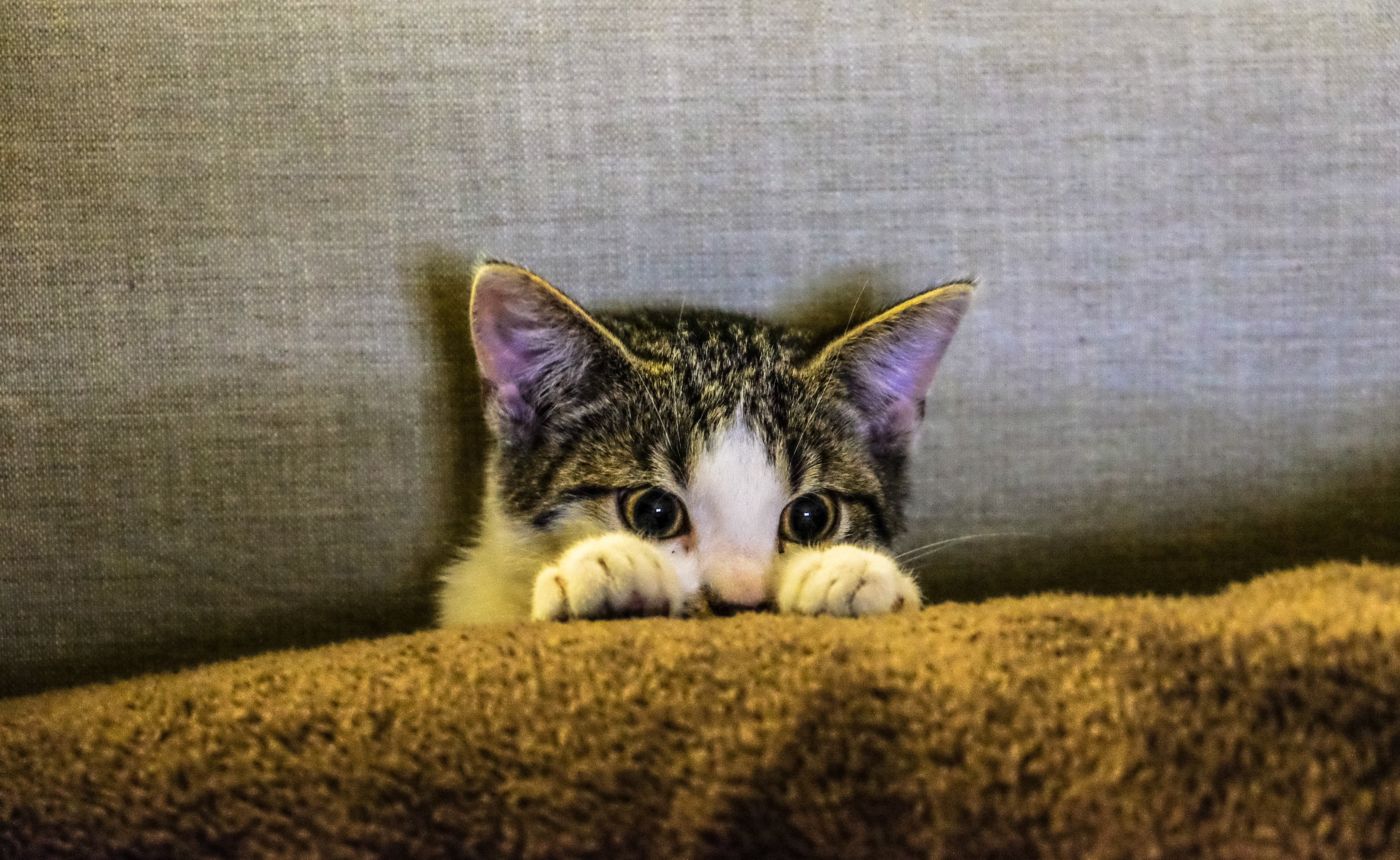 How to reduce flatulence in cats?