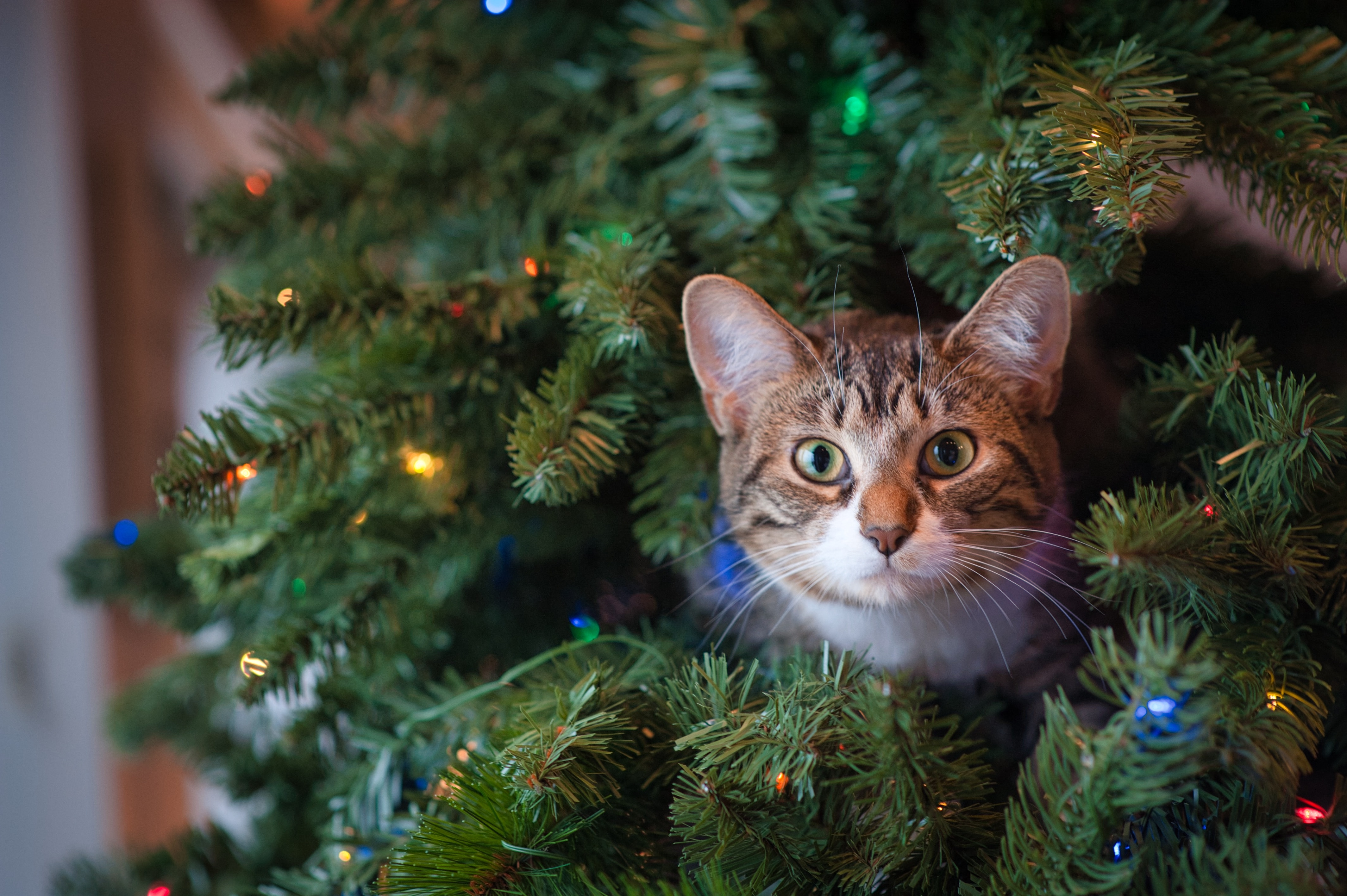 Your Guide to a Feline-Friendly Christmas