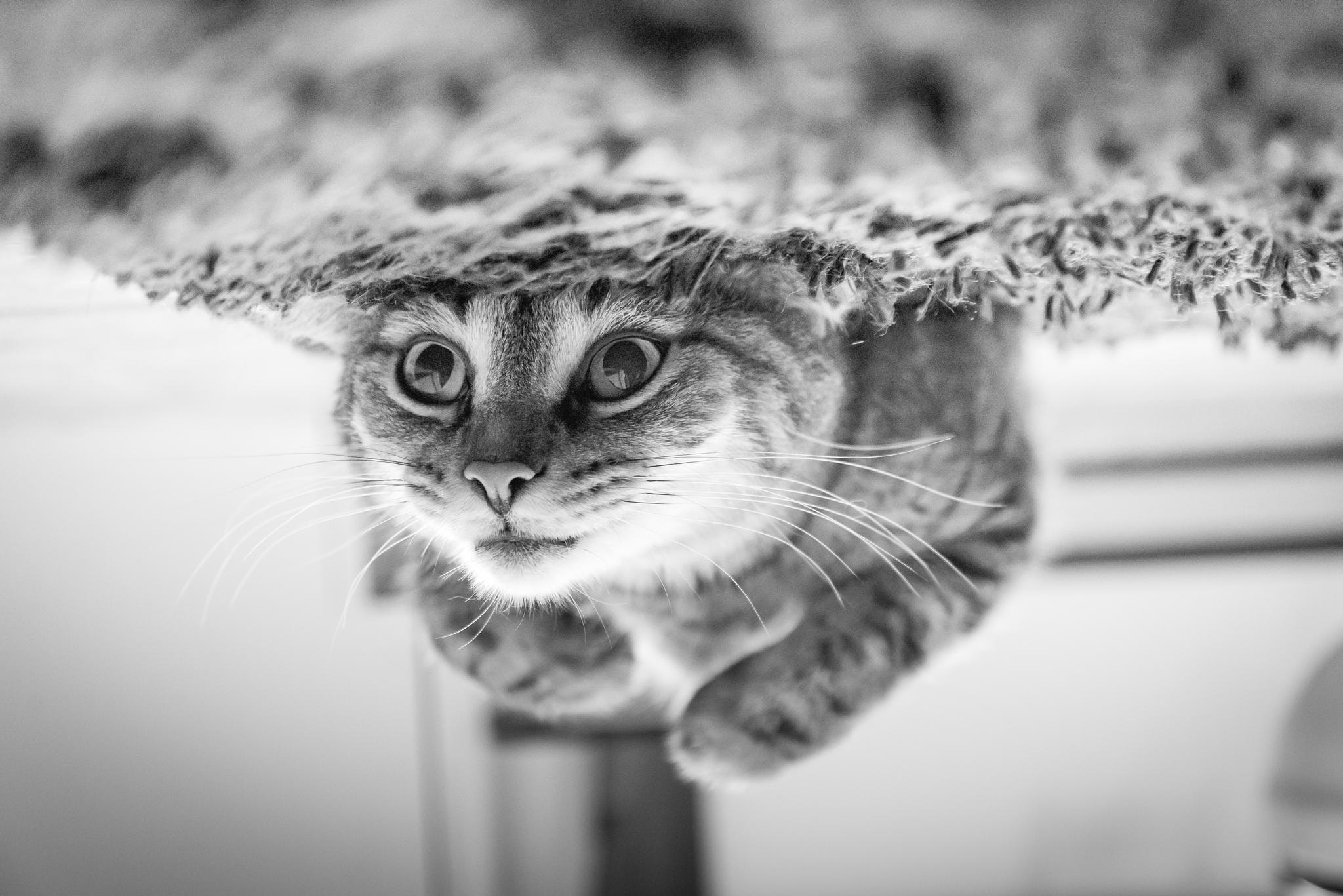 Tips on caring for your senior cats