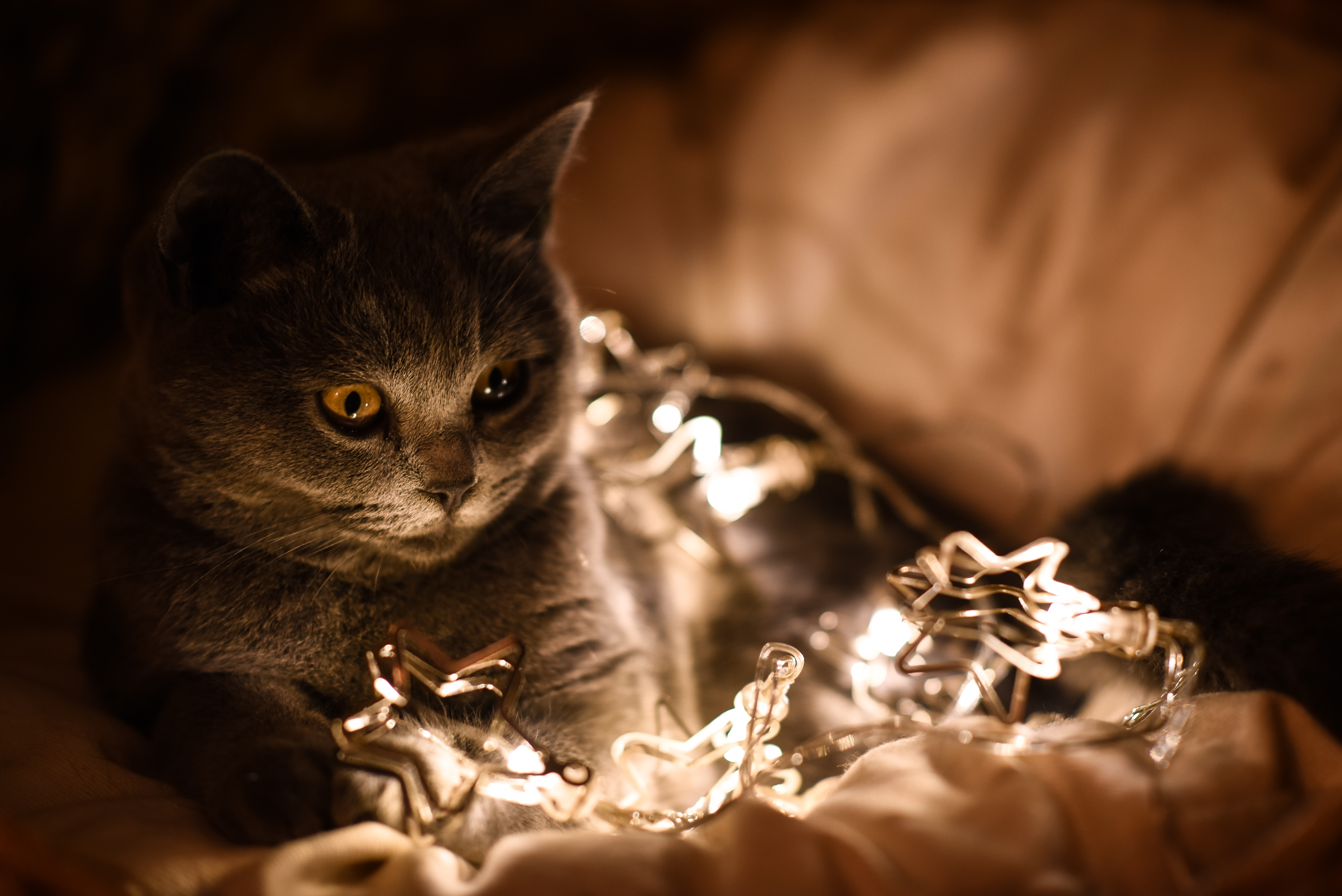 Your Cat's Wish List This Christmas