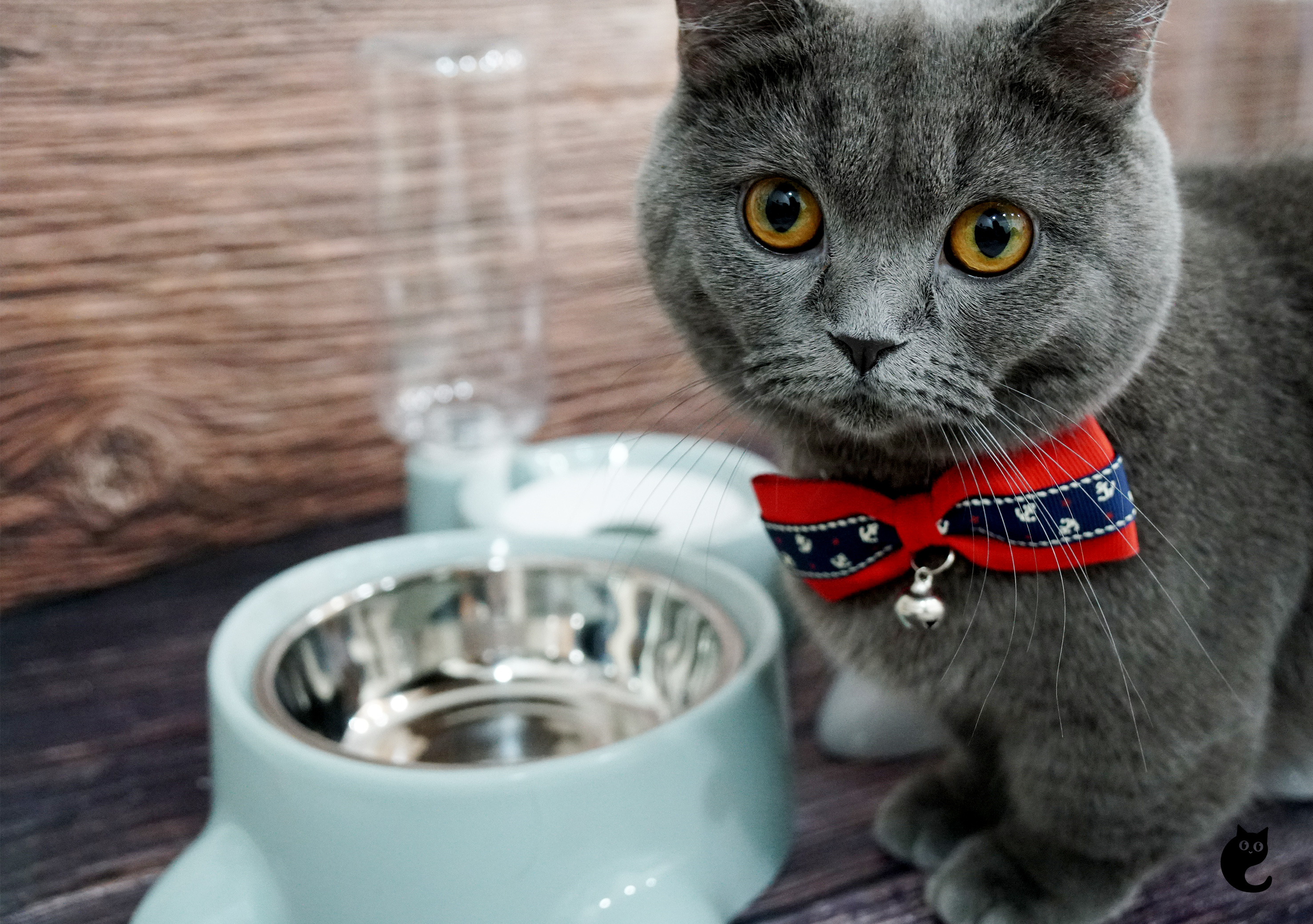 Gravity Flow Technology That Automatically Refills Your Cat's Water Bowl!
